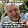 the fastidious worker lees swarm the queen lee